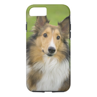 Coque iPhone 8/7 Colley rugueux, chien, animal