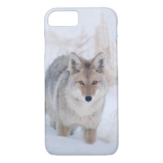 Coque iPhone 8/7 Coyote dans l'iphone de faune d'hiver 8/7 cas