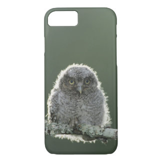 Coque iPhone 8/7 Cri strident-Hibou oriental, asio de Megascops,