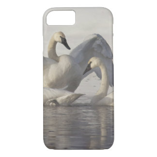 Coque iPhone 8/7 Cygnes de trompettiste en rivière de Madison en
