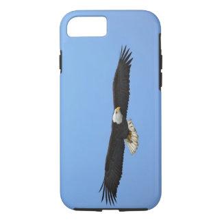 Coque iPhone 8/7 Eagle chauve en vol, Homer, Alaska, Haliaetus