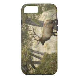 Coque iPhone 8/7 Élans de Taureau, parc national de Yellowstone,