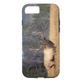 Coque iPhone 8/7 élans, elaphus de Cervus, taureau dans un domaine