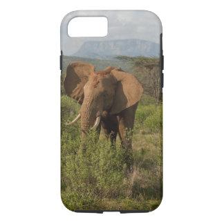 Coque iPhone 8/7 Éléphant africain, africana de Loxodonta, dans