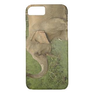 Coque iPhone 8/7 Éléphant indien/asiatique communiquant, Corbett 2