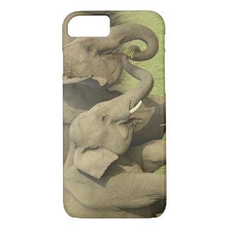 Coque iPhone 8/7 Éléphant indien/asiatique demandant la nourriture