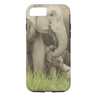 Coque iPhone 8/7 Éléphant indien/asiatique et jeunes un, Corbett 3