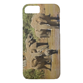 Coque iPhone 8/7 Éléphants africains, Loxodonta Africana, Samburu