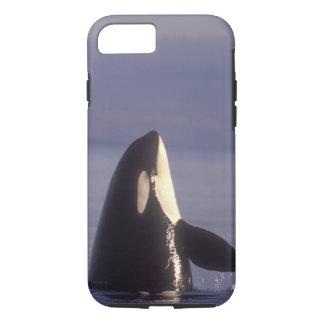 Coque iPhone 8/7 Épaulard d'orque de Spyhopping (orcinus d'orque)