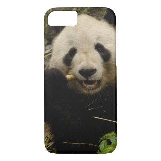 Coque iPhone 8/7 Famille de melanoleuca d'Ailuropoda de panda