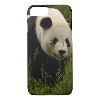 Coque iPhone 8/7 Famille de panda géant (melanoleuca d'Ailuropoda)