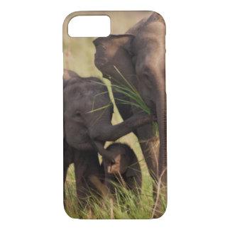 Coque iPhone 8/7 Famille indienne d'éléphant asiatique dans la