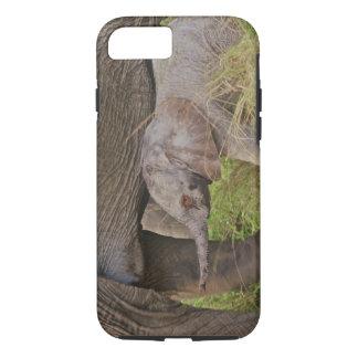 Coque iPhone 8/7 Faune de l'Afrique, Kenya, éléphant de bébé