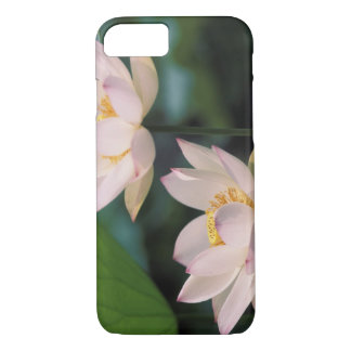 Coque iPhone 8/7 Fleur de Lotus dans la fleur, Chine