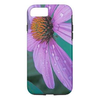 Coque iPhone 8/7 Fleur pourpre de cône avec des baisses de l'eau