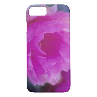 Coque iPhone 8/7 Fleur rose de cactus de hérisson (Echinocereus