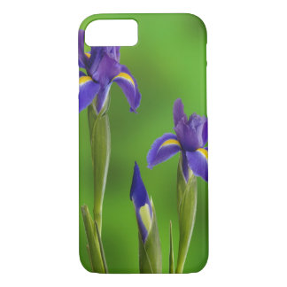 Coque iPhone 8/7 Fleurs d'iris