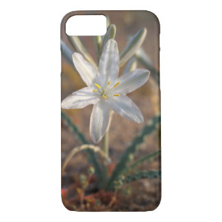 Coque iPhone 8/7 Fleurs sauvages de lis de désert