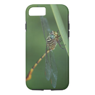 Coque iPhone 8/7 Forceptail Étroit-rayé, protracta d'Aphylla,