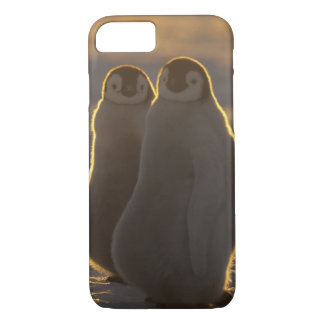 Coque iPhone 8/7 Forsteri de pingouins, d'Aptenodytes d'empereur),