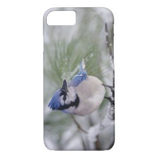 Coque iPhone 8/7 Geai bleu, cristata de Cyanocitta