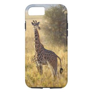 Coque iPhone 8/7 Girafe juvénile, camelopardalis 2 de Giraffa