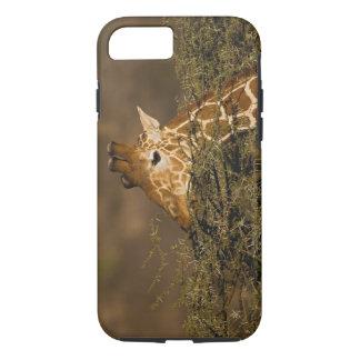Coque iPhone 8/7 Girafe réticulée, camelopardalis de girafe