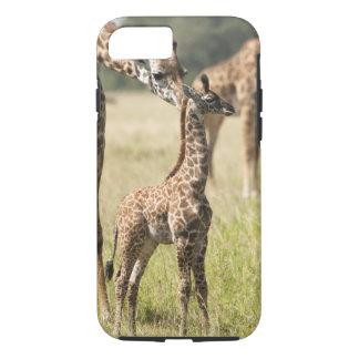 Coque iPhone 8/7 Girafes de masai, camelopardalis 2 de Giraffa