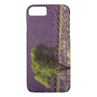 Coque iPhone 8/7 Gisement de lavande en haute Provence, France