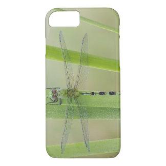 Coque iPhone 8/7 Grand Pondhawk, vesiculosa d'Erythemis, adulte