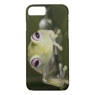Coque iPhone 8/7 Grenouille en verre africaine, viridiflavus de