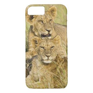 Coque iPhone 8/7 Groupe de petits animaux de lion, Panthera Lion,