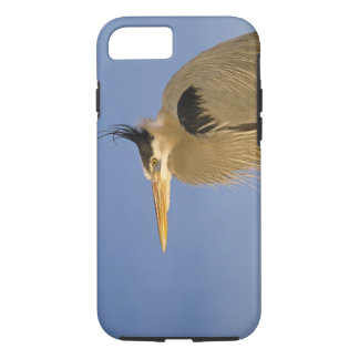 Coque iPhone 8/7 Héron de grand bleu, herodias d'Ardea, adulte,