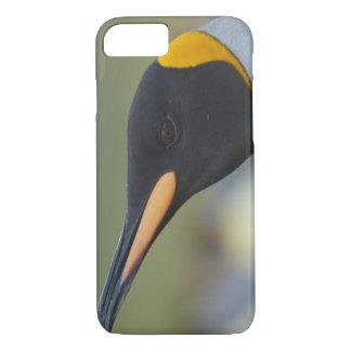 Coque iPhone 8/7 Île du sud de la Géorgie, port d'or. Pingouin de