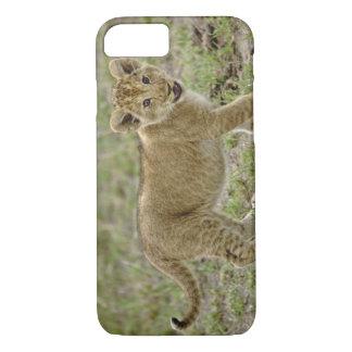 Coque iPhone 8/7 Jeune petit animal de lion, réservation de jeu de