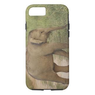 Coque iPhone 8/7 Jeunes un d'éléphant indien/asiatique sur