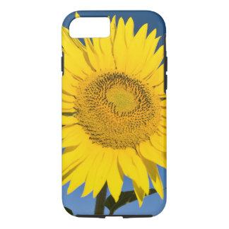 Coque iPhone 8/7 La France, Provence, Valensole. Support de