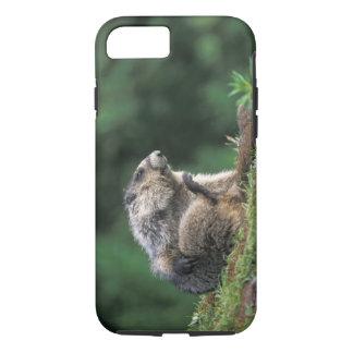 Coque iPhone 8/7 la marmotte blanchie, caligata de Marmota, raye