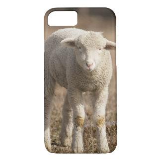 Coque iPhone 8/7 La Pennsylvanie centrale, Etats-Unis, moutons