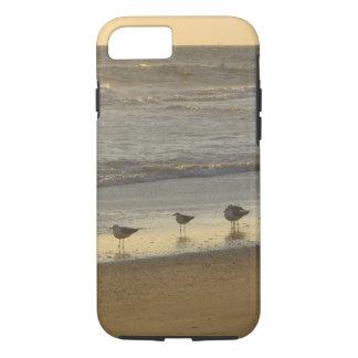 Coque iPhone 8/7 La sterne triche le lever de soleil d'océan de