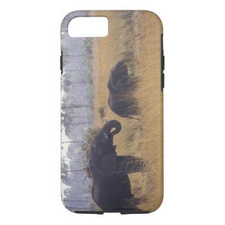 Coque iPhone 8/7 L'AFRIQUE, Botswana, éléphant africain