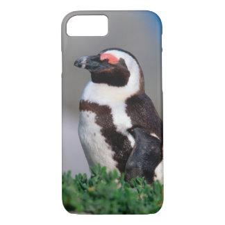Coque iPhone 8/7 L'Afrique du Sud, ville de Simons. Âne de sommeil