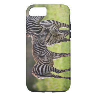 Coque iPhone 8/7 L'Afrique. La Tanzanie. Mère et bébé de zèbre