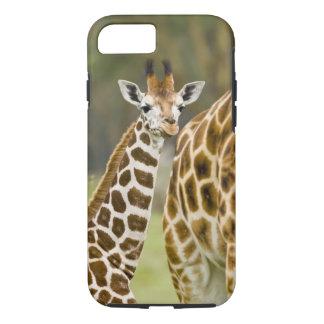 Coque iPhone 8/7 L'Afrique. Le Kenya. Bébé de la girafe de