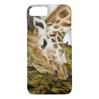 Coque iPhone 8/7 L'Afrique. Le Kenya. La girafe de Rothschild au