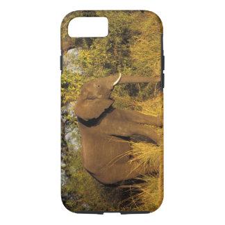 Coque iPhone 8/7 L'Afrique, Zimbabwe, parc national des chutes