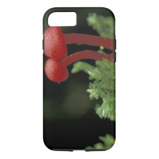 Coque iPhone 8/7 L'Amérique Centrale, Panama, province de Chiriqui,