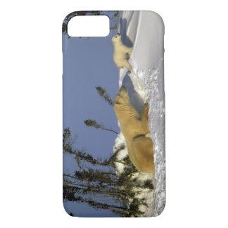 Coque iPhone 8/7 L'Amérique du Nord, Canada, Manitoba, Churchill. 5