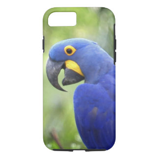 Coque iPhone 8/7 L'Amérique du Sud, Brésil, Pantanal. Mis en danger
