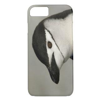 Coque iPhone 8/7 L'Antarctique, île de demi-lune. Plan rapproché